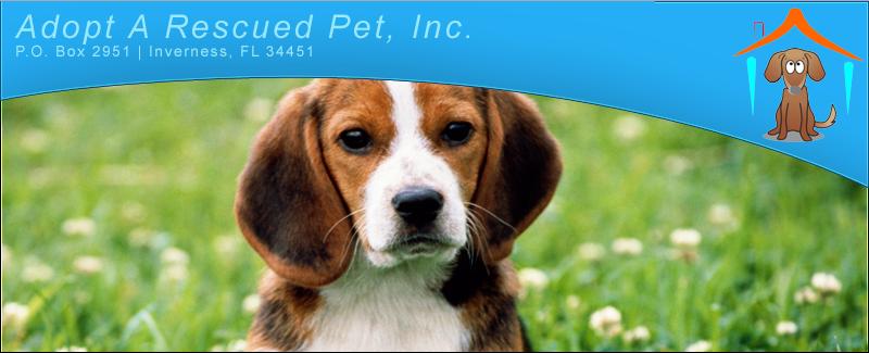 Adopt A Rescued Pet Inc.